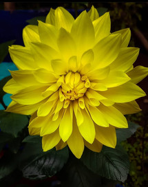 Shubham Roy_flower_7765001127 - SHUBHAM