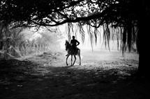 anupam mukherjee_the horse rider_9933340