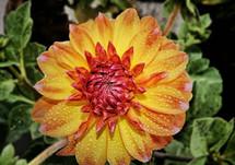 RitoshreeRoy_flower3_8617638235.jpg