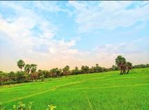 Sourav Bag_ Green nature_8167309481.jpg