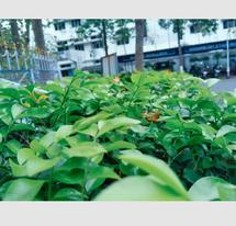 Sourav Bag_ Young fresh leaves_816730948