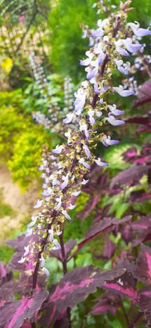 AbhishekKumarSinha_Flower1_8252771180.JP