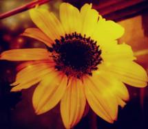 RitoshreeRoy_flower1_8617638235 - RITOSH