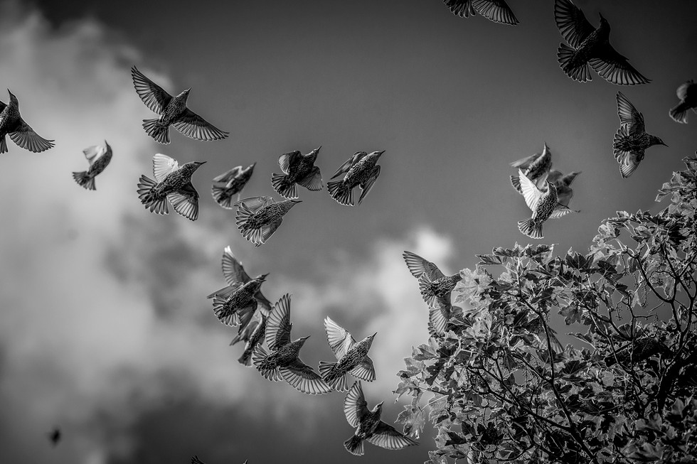 Vögel_k.jpg
