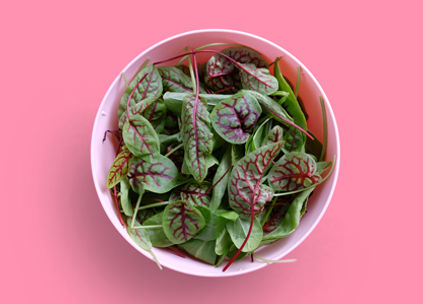Red Veined & Green Sorrel from Imagine Farms