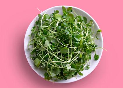 Watercress_leafy-green-hydroponic-vegetables_imagine-farms.jpg