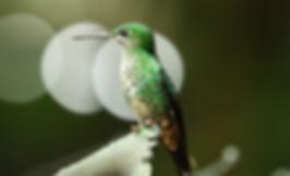 Costa Rica Selvatura Park