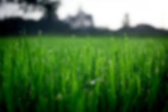 shallow-focus-photography-of-green-grass