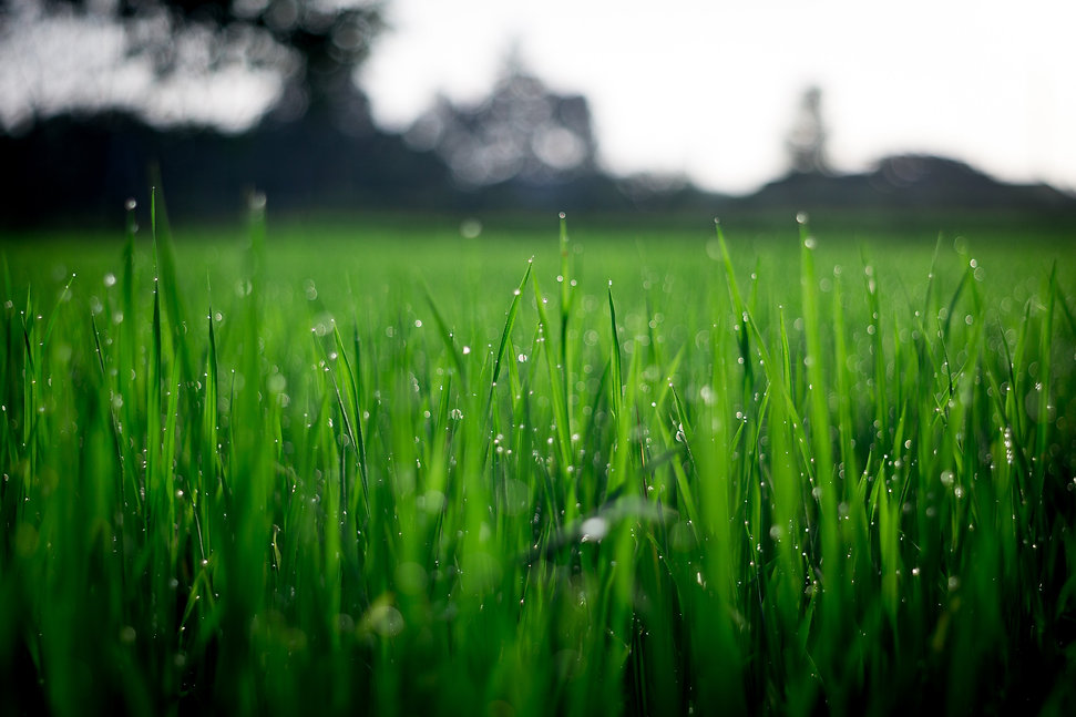 shallow-focus-photography-of-green-grass