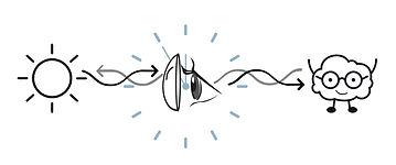 lumos-illustration-final.jpg