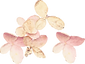 dried-hydrangea_parts_01.png