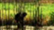 canefields1-1024x575.jpg