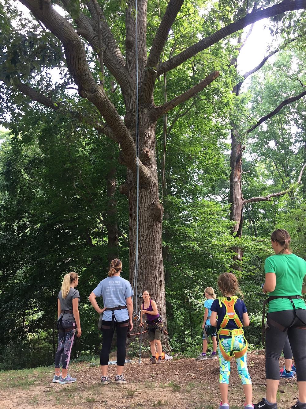 SE Tree Climbing