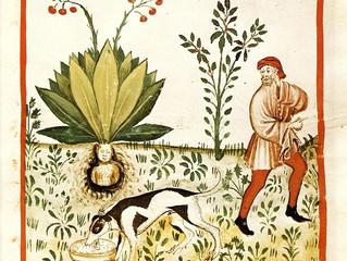 Dalle abbazie alle tavole del medioevo: le erbe e le spezie