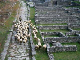 Cibo da pastori: la transumanza nei millenni.