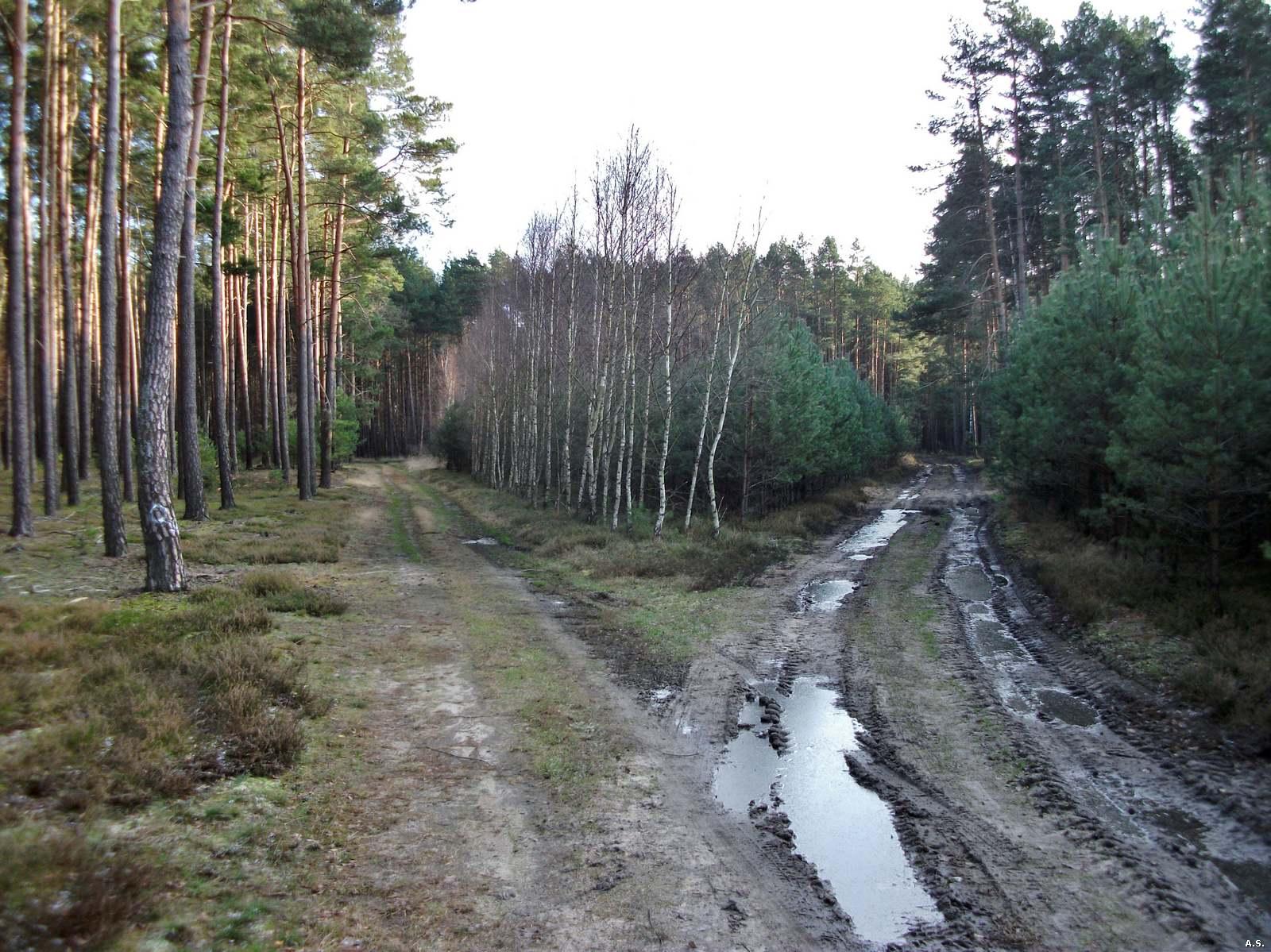 Rejon 19
