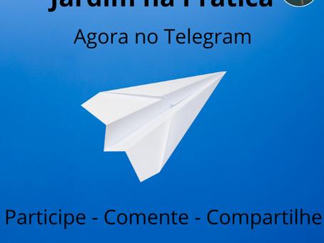 Agora no Telegram