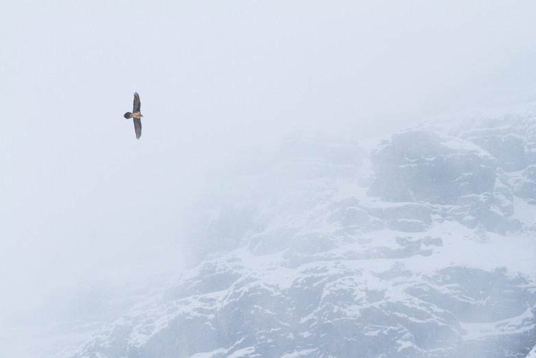 Vol de brouillard