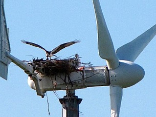 Wind Farms, Dead Birds, Electric Cars, & Oh Yeah, Oil