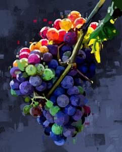 Grapes Study