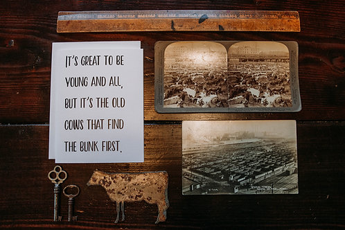 old cows find the bunk first-wholesale