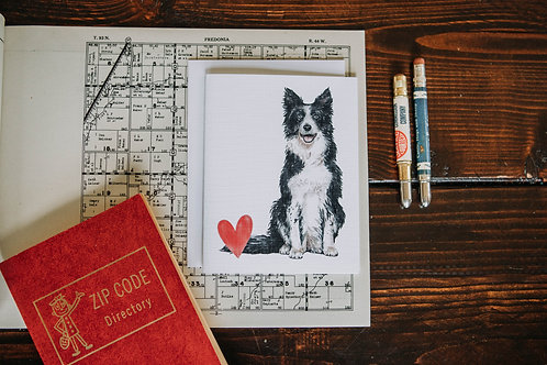 border collie love