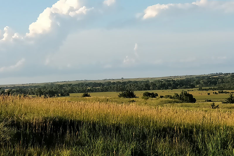 prairie1.jpg