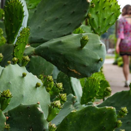 Challenge #7: 70% Cacti