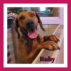Ruby framed.jpg