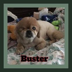 Buster framed.jpg