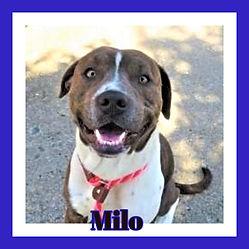 Milo framed.jpg