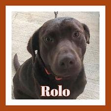 Rolo framed.jpg