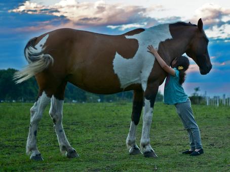 Penbode Equine Vets - Equine newsletter 2020