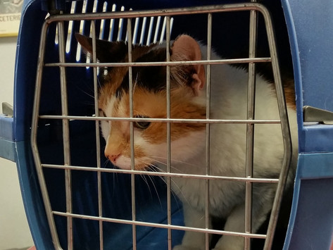 How to choose and use a cat carrier