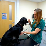 Nurse Clinic - Confidence at the vets