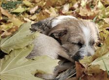 Penbode Pet Vets - Pet newsletters 2018