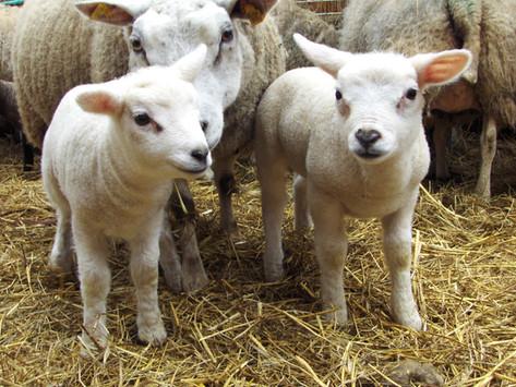 Penbode Farm Vets - Farm newsletters 2019