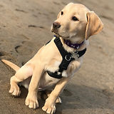 Pet Behaviour Service
