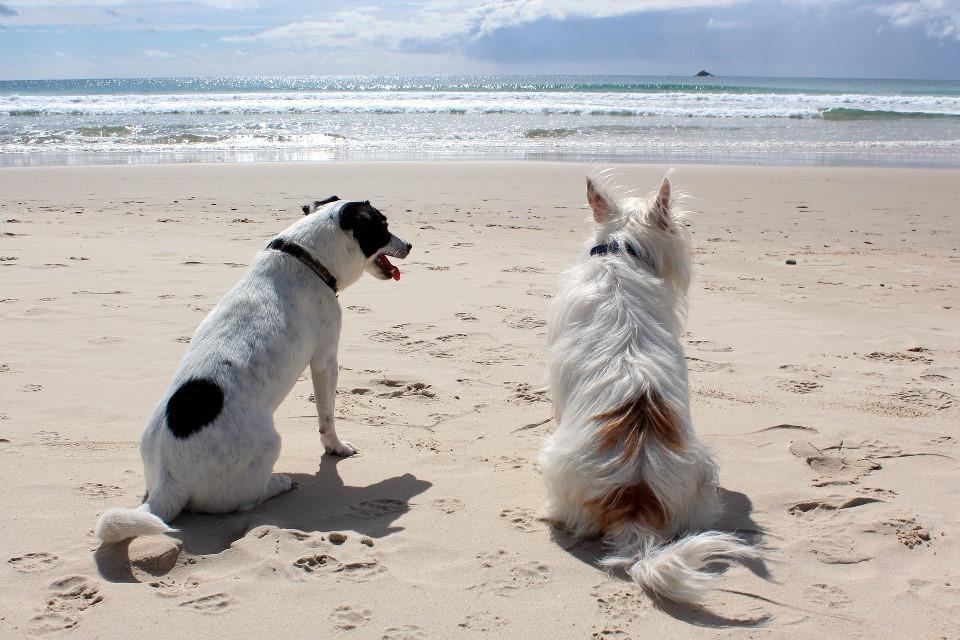 Dogs enjoying the beach