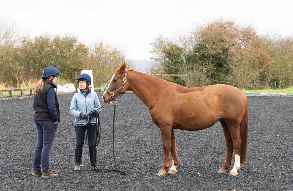 Choosing a new horse
