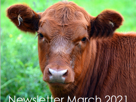 Penbode Farm Vets - Farm newsletters March 2021