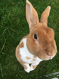 Nurse Clinic - Rabbit care