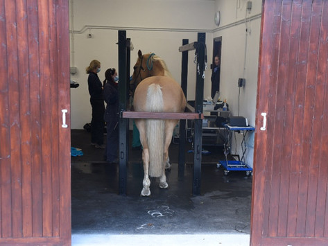 Notes for owners of horses undergoing a surgical procedure with Penbode Equine Vets