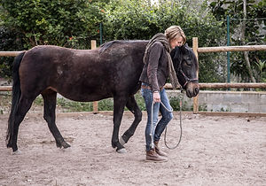 Equi Gestalt Therapy with Gala - flip