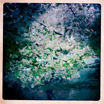 Blossom in the Rain