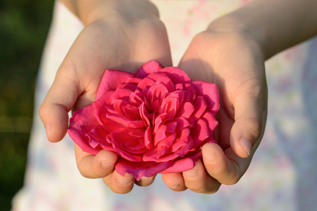 child-hand-holding-beautiful-flower-rose_116407-649