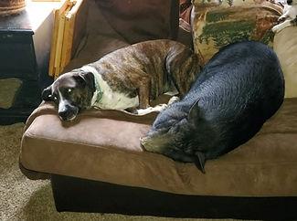 Family Dog and Pig.jpg