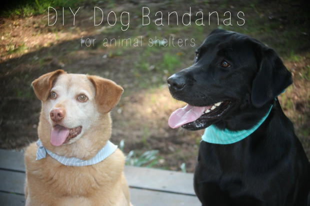 Project Made: Dog Bandanas for Animal Shelter