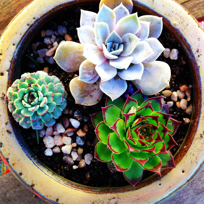 Project Made: Pretty Pot Plant