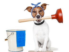 The Downfalls and Risks of Not Hiring a Commercial Cleaning Service for Your Office